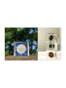 Nature Art of Dandelion Enclosed in Clear Acrylic Resin Cube
