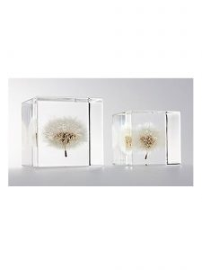 Dandelions Enclosed in Clear Acrylic Resin Cubes