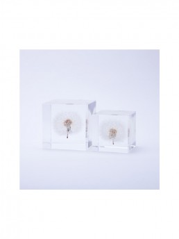 Large and Small Dandelions Enclosed in Clear Acrylic Resin Cubes