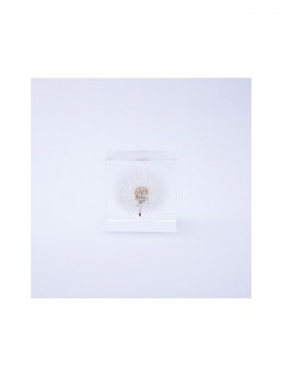 Small Dandelion Enclosed in Clear Acrylic Resin Cube