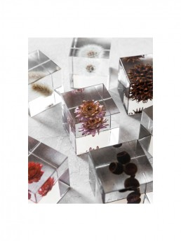 Nature in Enclosed in clear Acrylic Cube